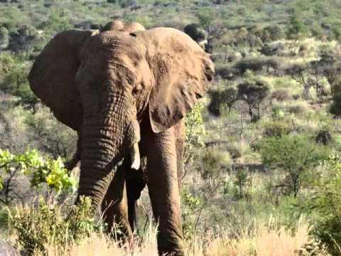 South Africa Nov 20121