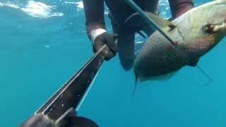 spearfishing dentex agguato