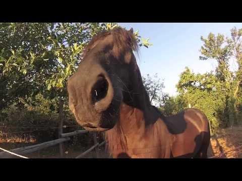 Come costruire un recinto per i cavalli animali dal mondo for Costruire recinto per cani