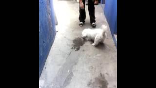 Romeo jugando