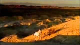 Maicon Alexandre - Te Amo ( VideoClip)