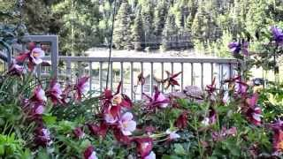 The Gardens of Edelweiss Lodge & Spa