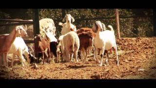 Novia De Rancho (Video Oficial 2017) - El RM