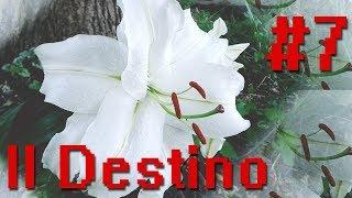 Il destino esiste ed è racchiuso in questo fiore » #PLAY