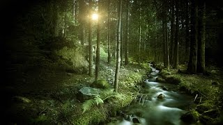 Stratovarius - Endless Forest (MIDI cover)