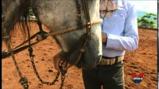PILLIN RIVERA DVD 1. Caballo Charro.Iniciacion del potrillo.La Cala