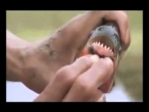 Amazonun Katil Hayvanları Bölüm 1-4
