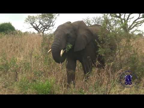 Safari Pazola – RPA czesc 8 – masa zwierzakow w parku