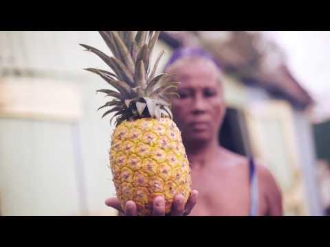 El Mosquitero de Riccie Oriach Letra y Video