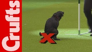 HILARIOUS - Dog takes a dump on TV - Crufts 2012 Bloopers