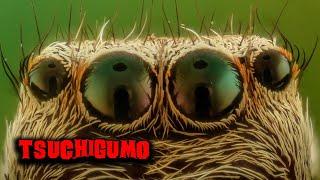 Tsuchigumo - il ragno gigante del folklore giapponese