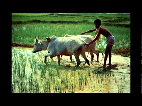 Amazing Images of Beautiful Bangladesh