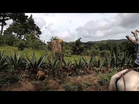 Alex Travels: Selva Negra – Matagalpa, Nicaragua