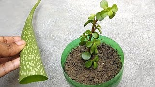 Grow any plants from cuttings using natural rooting hormone | Grow from cuttings