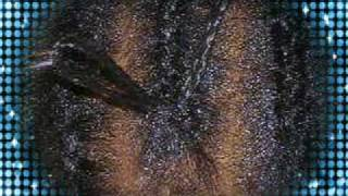HOW TO LATCH HOOK/CROCHET BRAIDS