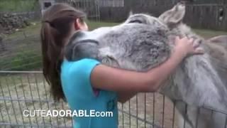 Cute friendship: Donkey and girl