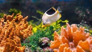 How to Clean a Saltwater Fish Tank   Aquarium Care