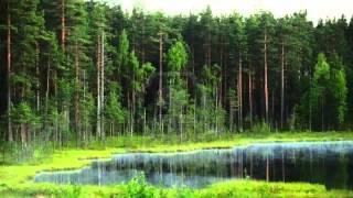 Bosque - Efecto de Sonido