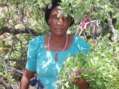 Tswana sangoma and herbalist and initiation of trainees