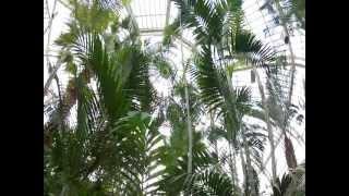 Como Conservatory 8-18-12
