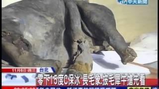 中天新聞》冰凍3萬9千年 少女長毛象YUKA亮相