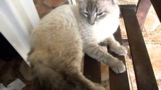 Amaral o Gato Biônico, em 03 10 2014