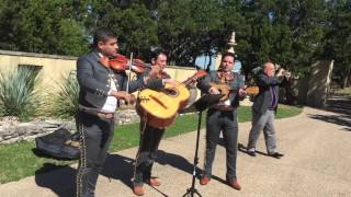 Mariachi Los Toros - Metallica cover (Nothing Else Matters) 🤘 Austin, TX / Cristal Daniel's Wedding