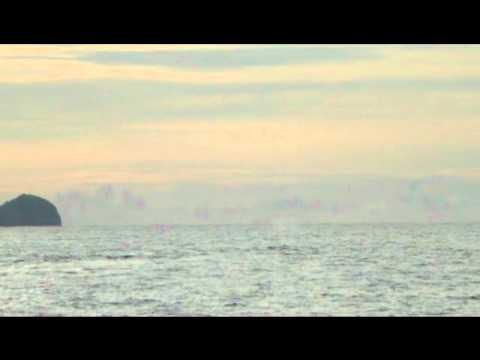 ballena playa conchal