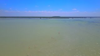 Flamingos in the Yucatan Riviera shot with the DJI Mavic Pro 4K