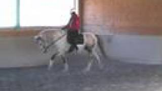 Curly Horse Stallion - Coach's Comments