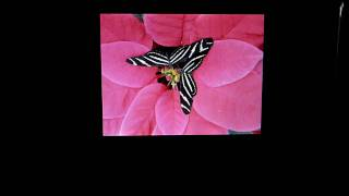 Squeezebox Touch Image Viewer