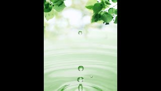 Leaves And Water Drops Live Wallpaper