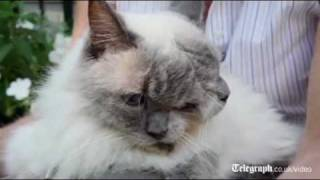 Weird cat with two faces breaks Guinness world record