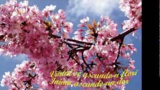 FLOAREA TANASESCU -VIN FLORIILE CU SOARE