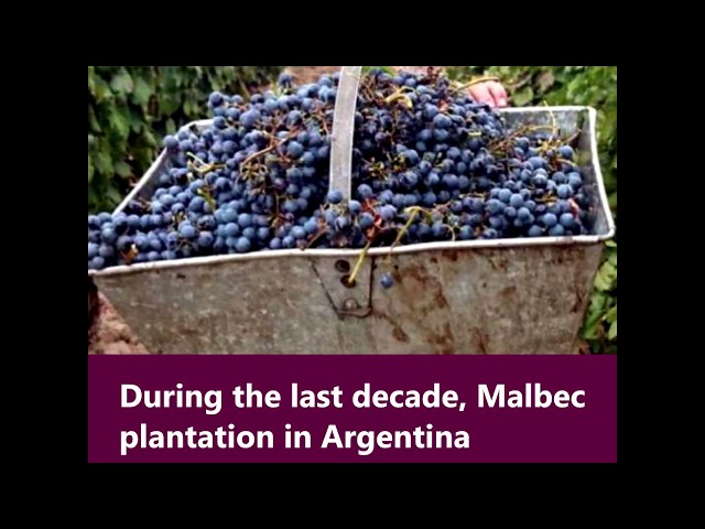The map of Malbec