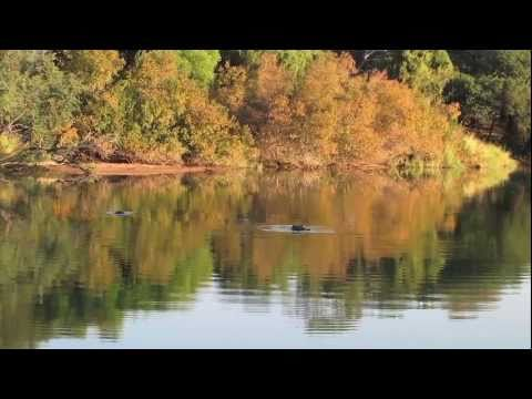 Limpopo River Camp – Total nature, total peace.