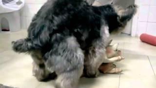 Cachorro comendo 2 porcas