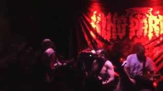 King Parrot @Newtown Sydney 23/05/15 the stench of hardcore pub trash