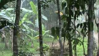 Beautiful rain sound in bangladesh