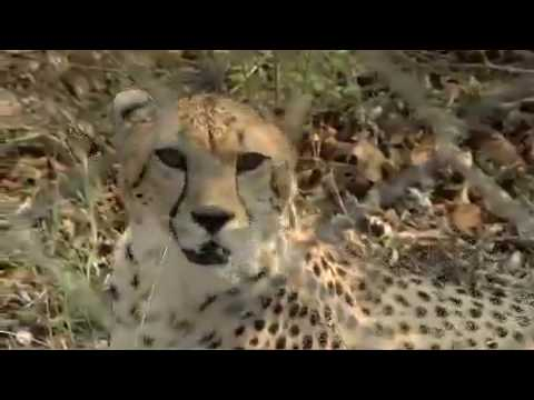 Hoedspruit Cheetah Endangered Species Centre Limpopo South Africa