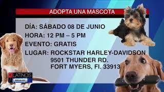 Este sábado se llevará a cabo un programa de adopción de perros en Fort Myers