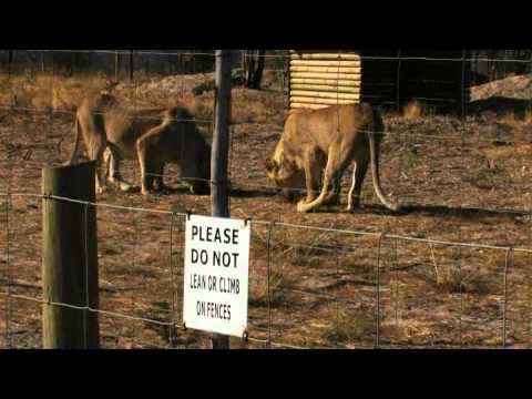 Lion Park – South Africa Travel Channel 24