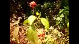 Amazônia, flor silvestre em meio à mata