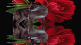 Julio Iglesias - Mal De Amores
