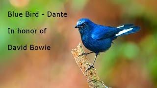 Blue Bird -  Dante