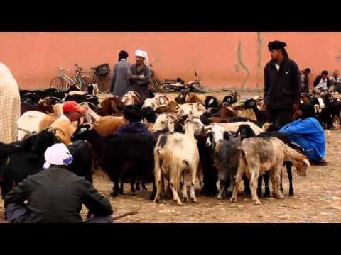 Guelmim( كلميم )-Viehmarkt und Souk-livestock market in morocco