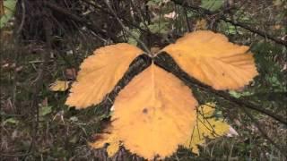 JETZT und die bunte Blättervielfalt