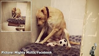 Abandoned dog 'shuts down' after being returned to animal shelter by adopted family