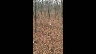 How to Decoy a Buck using a doe decoy | Big Bidness Outdoors