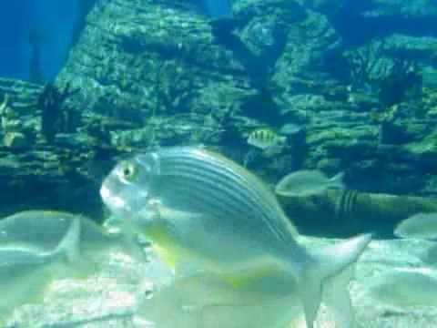 Aquarium uShaka Marine World Durban KwaZulu Natal South Africa